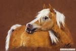 Hafi, Pastellmalerei, Pferde, Kreide