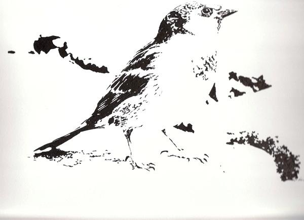 Tuschmalerei, Schwarz weiß, Tiere, Vogel, Zeichnung, Spatz