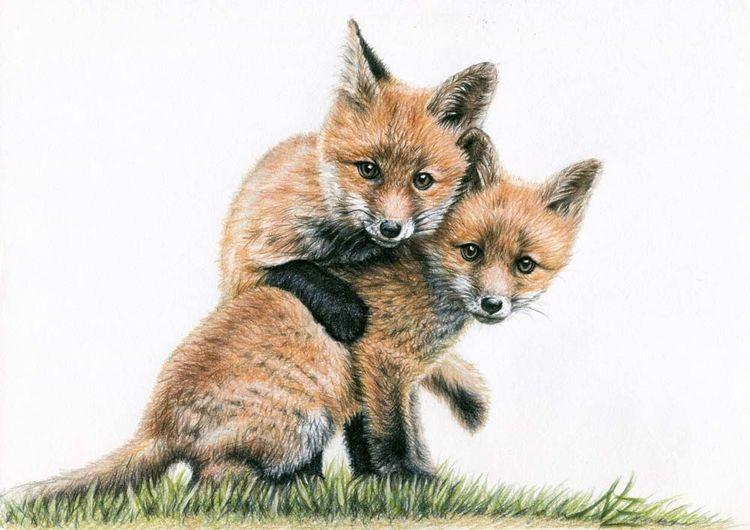 Fuchs, Welpe, Zeug, Buntstiftzeichnung, Fuchskinder, Tiere