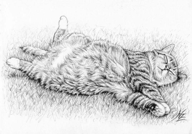 Graphitzeichnung, Katze, Haustier, Grafit, Tiere, Zeichnung