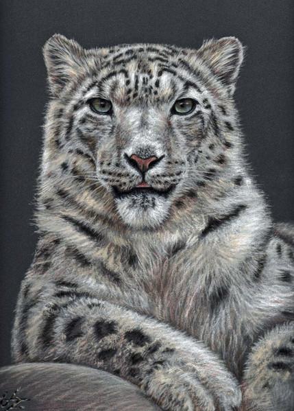Tierzeichnung, Schneeleopard, Tierportrait, Großkatze, Pastellmalerei, Leopard
