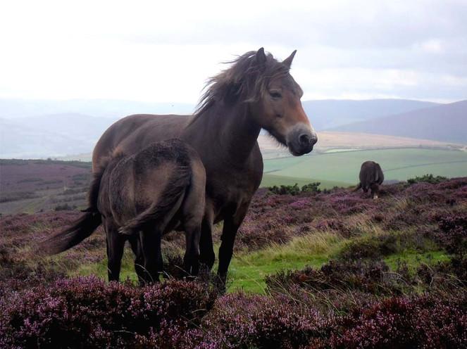 Pferde, Pony, Fotografie, Mutter, Fohlen