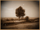 Sepia, Antik, Baum, Digitale kunst