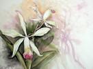 Orchidee, Blumen, Aquarellmalerei, Aquarell