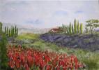 Feld, Italien, Blumen, Tulpen