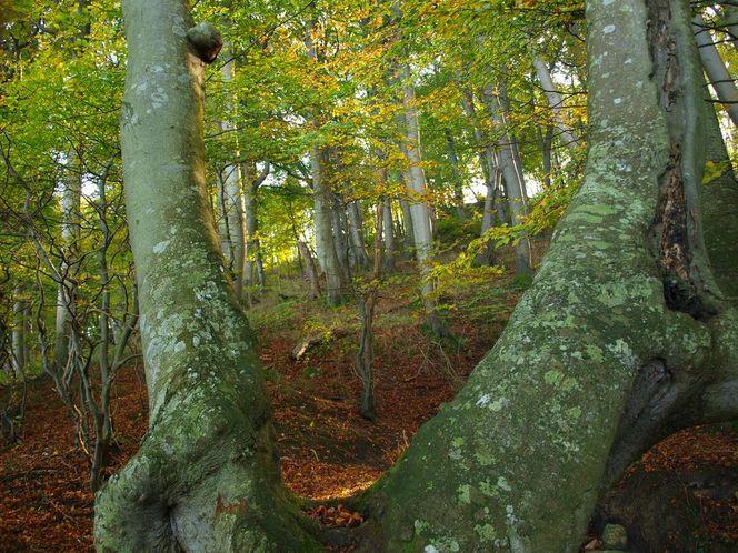 Rügen, Herbst, Wald, Fotografie, Herbstwald
