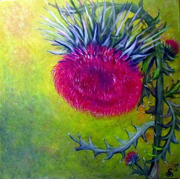 Natur, Blumen, Gelb, Pflanzen, Blau, Heilpflanze