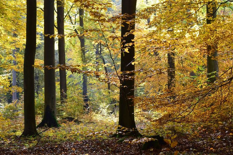 Brandenburg, Herbstlaub, Herbst, Radweg, Herbstblätter, Herbstfarben