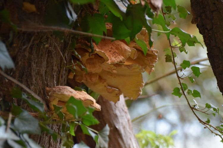 Herbst, Pilze, Tonstich, Ton, Baumpilz, Natur