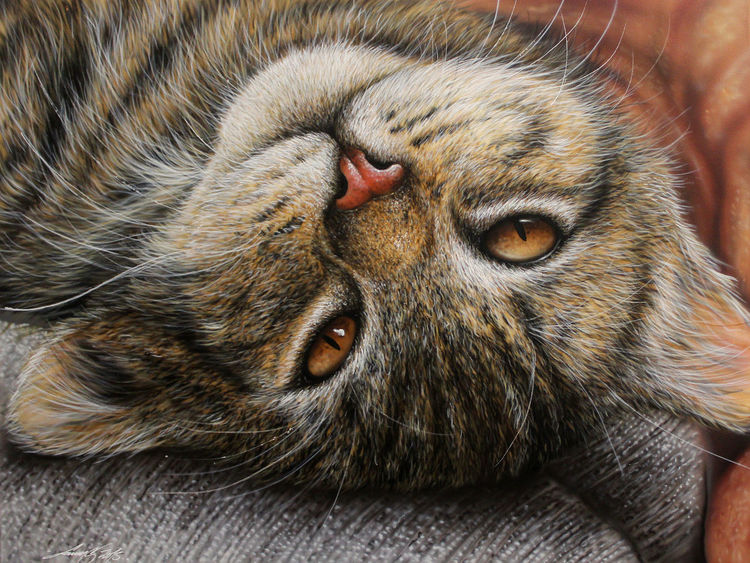 Airbrush, Katze, Sprühdose, Malerei