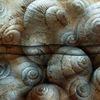 Überblick, Forest snails, Fossilien, Blau