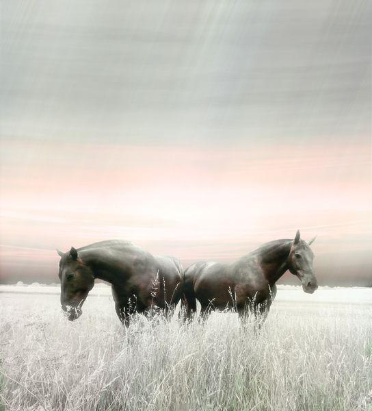 Unzertrennlich, Paar, Verwandtschaft, Pferde, Wiese, Rassepferd