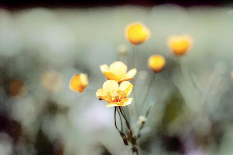 Eleganz, Blumen, Licht, Gefühl, Garten, Natur