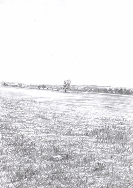 Bleistiftzeichnung, Grau, Baum, Schwarz, Zeichnungen