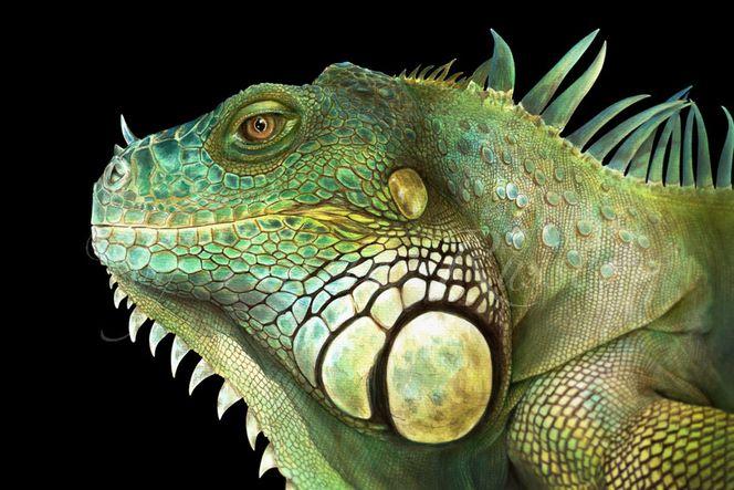 Reptil, Reptilie, Tiere, Leguan, Gekko, Tierportrait