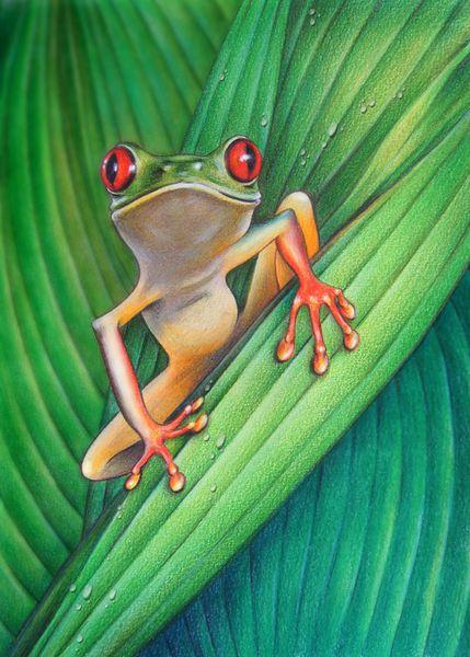 Frosch, Baumfrosch, Tiere, Urwald, Fauna, Blätter