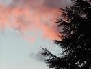 Abend, Himmel, Baum, Wolken