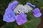 Natur, Fotografie, Nuance, Blau