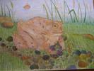 Buntstiftzeichnung, Erdkröte, Zeichnung