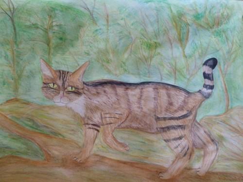 Wilkatze, Wildtiere, Zeichnung, Aquarellmalerei, Aquarell, Wildkatze