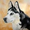 Husky, Hundeportrait, Malerei, Tiere