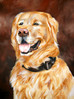 Golden retriever, Hundeportrait, Tierportrait, Malerei