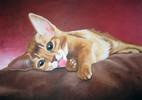 Liegend, Welpe, Katze, Malerei