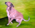 Hund, Lebendig, Aufmerksamkeit, Erwartungsvoll