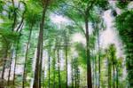 Blätter, Baum, Sonne, Grün