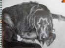 Schwarz weiß, Skizze, Schlaf, Hund