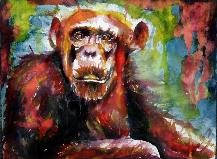 Portrait, Menschenaffen, Gesicht, Affe, Ausdruck, Schimpanse