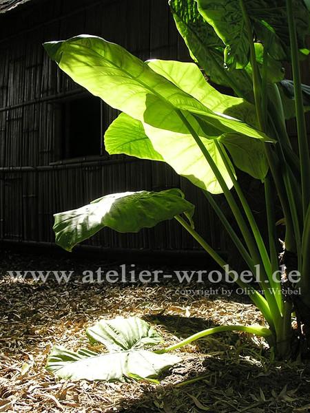Natur, Fotografie, Schmetterling, Makro, Pflanzen, Blätter