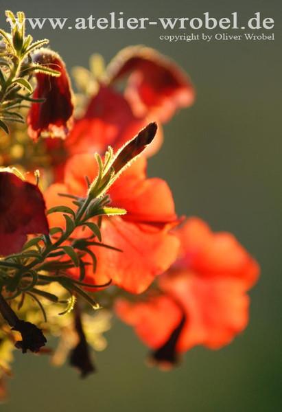 Makro, Blüte, Pflanzen, Natur, Schmetterling, Fotografie