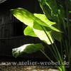 Natur, Fotografie, Schmetterling, Pflanzen