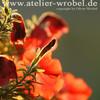 Fotografie, Schmetterling, Makro, Blüte
