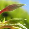 Blüte, Makro, Natur, Pflanzen