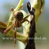 Fotogradfie, Natur, Spinne, Tiere