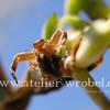Spinne, Fotogradfie, Tiere, Natur