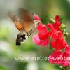 Schmetterling, Makro, Fotogradfie, Natur