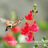 Fotogradfie, Natur, Insekten, Tiere