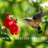 Makro, Taube, Insekten, Natur