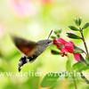 Makro, Insekten, Taube, Natur