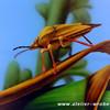 Acrylmalerei, Insekten, Malerei, Käfer