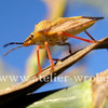 Schmetterling, Fotografie, Insekten, Makro
