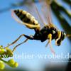 Natur, Fotografie, Schmetterling, Insekten