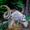 Tiere, Airbrush, Landleben, Ziegenbock