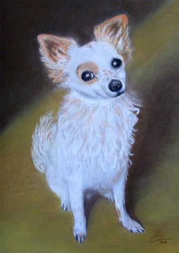 Pastellmalerei, Hund, Tierportrait, Pas, Zeichnungen