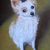 Hund, Tierportrait, Pas, Pastellmalerei