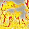Digitale kunst, Abstrakt, Elefant
