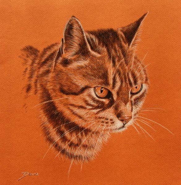 Katze, Tierportrait, Katzenportrait, Kohlezeichnung, Miteintes, Malerei